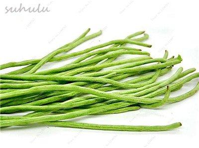 8 Pcs Multi Color haricots desserrées graine long des haricots semences Graines de plantes en pot poussent plus vite vivaces Fleurs Plant Garden 8