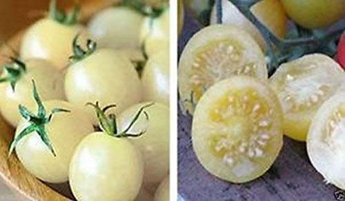 snow white tomato seeds - 3