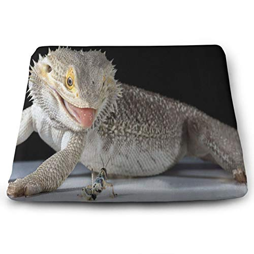 Unique Bearded Dragon About To Eat A Locust Chair Seat Cushions Pads Memory Foam Office Dining Kitchen Soft Chair Cushion Set Of 4 for Pressure Relief, Wheelchairs, Patio, Cafe, Garden, Indoor, Non Sl