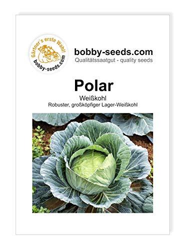 Bobby-Seeds Kohl-Samen Weißkohl Polar Portion