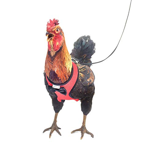 Yesito Chicken Harness Hen Size with 6ft Matching Leash – Adjustable, Resilient,...