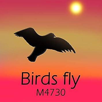 Birds fly