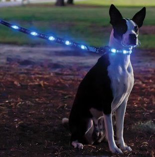 LED Dog Leash and LED Dog Collar Set with Quick Snap Buckle (Blue)