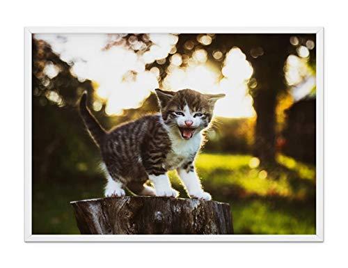 Katzen Poster Foto Bild - Die dezente & coole Wandbild Dekoration - kleiner Tiger grau weiß gestreift