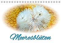 Meeresblueten (Tischkalender 2022 DIN A5 quer): Glanzvolle Fotografien von Blumentieren aus der Unterwasserwelt (Monatskalender, 14 Seiten )