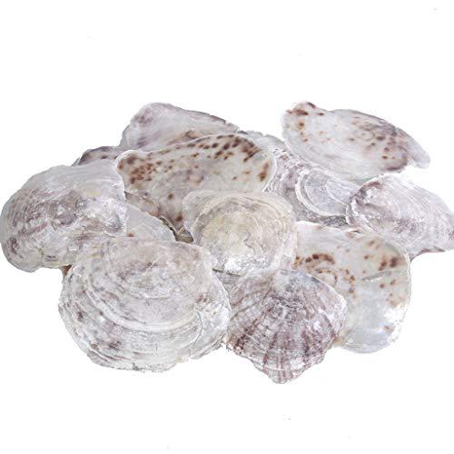 Muschel Placuna Placenta - Perlmuttscheiben - Naturdeko - Maritim - Echt - ca. 8-14 cm - 1 VE = 1kg - 28560