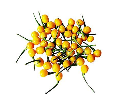 seedsown 10 X Aji Charapita Hot Pepper Samen -Versand Von Germany-