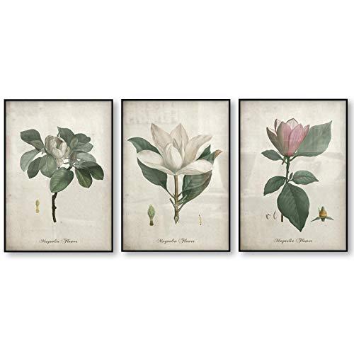 ThinkingPower Blumen-Kunstdruck-Set Kunstplakat Botanische Leinwanddrucke Magnolien-Leinwandbild Vintage-Poster Antikes Kunstdekor 70 x 90 cm (27,5 Zoll x 37,4 Zoll) 3-teilig Rahmenlos
