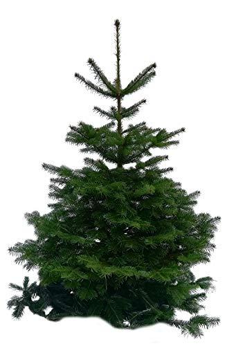 Nordmanntanne, 125cm-150cm, Tannenbaum, Weihnachtsbaum echt natur frisch geschlagen echter Weihnachtsbaum (Holz M)