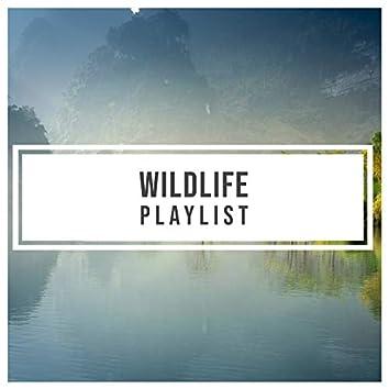 Relaxing Sleepy Wildlife Playlist