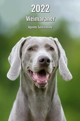 cuccia cane weimaraner 2022 Weimaraner Agenda Settimanale: 143 Pagine   Dimensioni DIN A5   Pianificatore   14 Mesi   Calendario   Diario   Cane   In Italiano
