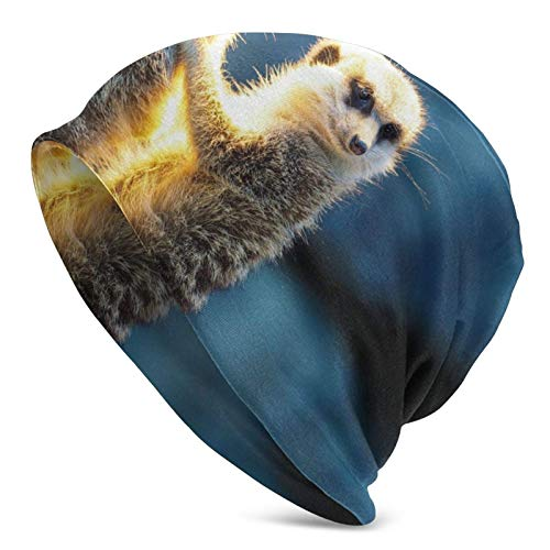 XCNGG Sombreros Gorras Skullies Gorros Knit Beanie Hat Meerkat Sunshine Skull Cap Running Comfortable Warm Beanie Hat for Men Women