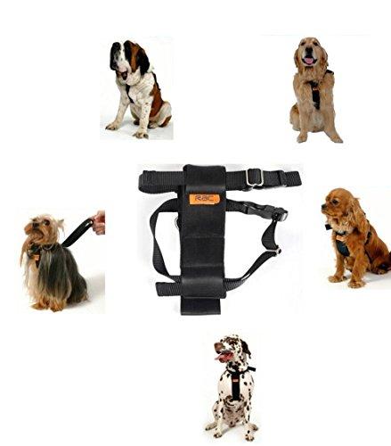 RAC standard pour chien Harnais de voiture, 30–41 cm (30,5–40,6 cm) poitrine Taille S