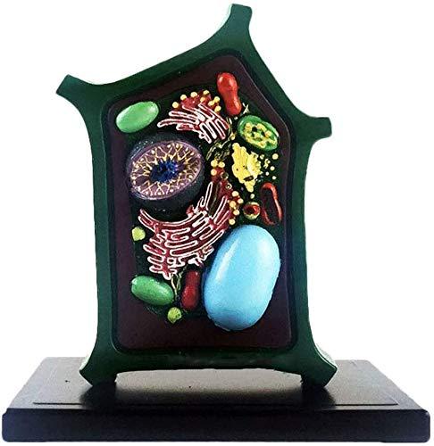 LBYLYH Pflanzenzelle Modell - Proben Mikroskopisch Kleine Pflanze Medizinisches Modell Modell Vergrößert Struktur Zelle - Für Medizinische Anzeigemodellstudie