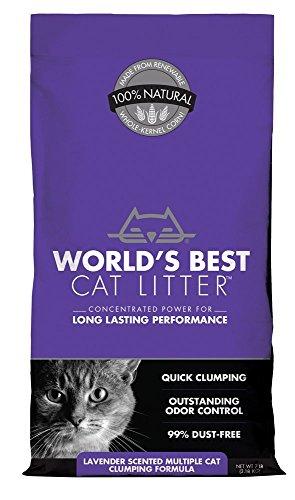 Mundial de mejor Cat camada, rápido...