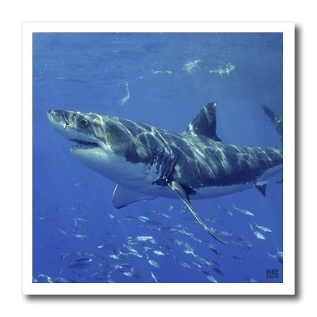 3dRose ht_10583_3 Great White Shark-Iron on Heat Transfer for White Material, 10 by 10-Inch