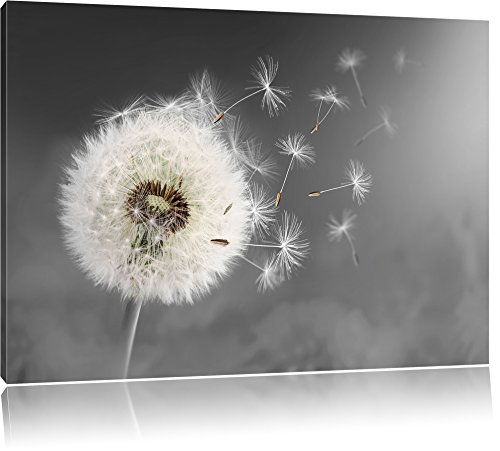 Pixxprint Löwenzahn Samen als Leinwandbild | Größe: 100x70 cm | Wandbild | Kunstdruck | fertig bespannt
