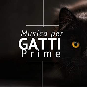 Musica per Gatti Prime - 2 Ore di Musiche Rilassanti Strumentali