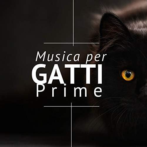 Gatto Matto