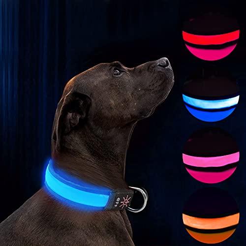 Collier de Chien LED Light Up Collier de Chien Rechargeable USB étanche, Bande de Chien de Nuit avec 3 Modes Lumineux, Rend Votre Chien Visible, sûr et vu (Blue, M)