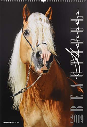 Beautiful Horses 2019