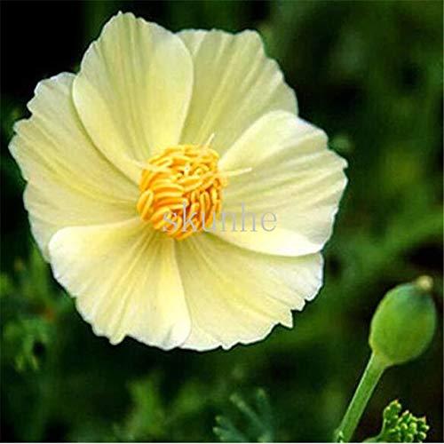 AGROBITS Pavot de Californie bonsaïs Californie Pavot bonsaïs Paysage bonsaïs Fleur Jardin vert 100pcs Plantation de fleurs (Hualing cao): 2