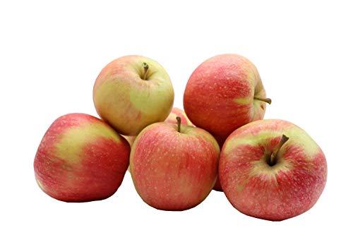 Bleichhof Äpfel Pinova - süß-säuerliche Kreuzung aus Golden Delicious und Clivia (5kg) Neue Ernte 2020