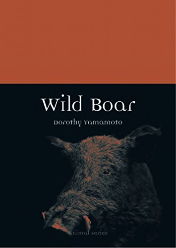 Yamamoto, D: Wild Boar (Animal)