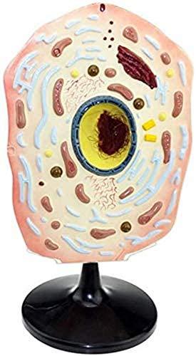 Modell der Anatomie Mobil - Modell der Tier- und Pflanzenzellen - Mikroskopisches Tiermodell der Zellmodell der Zellstrukturgröße - Modell für Arzt, Tier