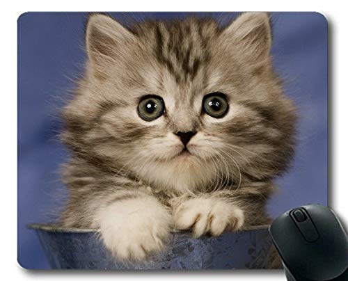 Gaming Mouse pad,Kitten Tabby Cat Animal Cat Mouse pad,Mouse mat for Computer cat121