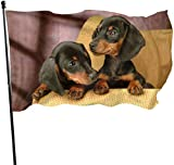Oaqueen Flagge/Fahne Cute Dackel Dog Lover Official Flags Durable Heavyweight House Flag Fade Resistant Outdoor Banner with Grommets Yard Holiday and Seasonal Decorative Flags 2020-3X5 Ft
