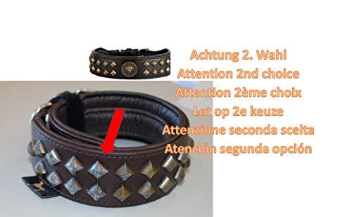 MICHUR Diego schwarz Hundehalsband Leder, Lederhalsband Hund, Halsband, Leder, mit Löwenkopf Applikation, Flachnieten in Aklt-Messing Optik, schwarz, in verschiedenen Größen erhältlich