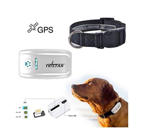 TKSTAR GPS Tracker For Dog Localizzatore cane traceur Tracking cane con cane Pet Monitor di attività anti-perdu con una piattaforma di monitoraggio in linea gratuita TK909
