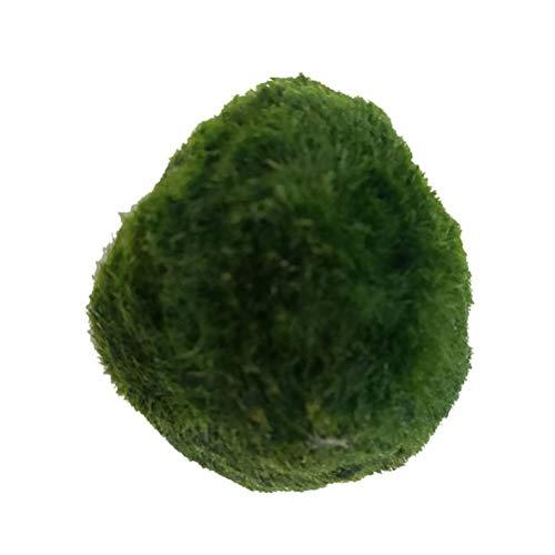 WBTY Algenkugeln für Aquarien, ökologisch, grüne Algenkugel, Mikro-Landschaft, Aquarium, Landschaftsbau, künstliche Aquarium-Pflanzen, Simulation Seegras, Wasser, Unkraut