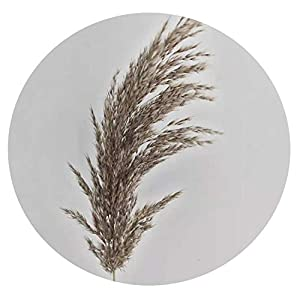 Solardragon 20 Pcs Decor Flowers Bunch Dried Plants Pampas Grass Natural phragmites communis Head Length 30 35cm-in Artificial & Dried Flowers from Home & Garden,20pcs raw Color,M