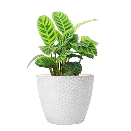 La Jolíe Muse Outdoor Indoor Planters Flower Pots - 24CM Planter Pot Containers, Plant Pots, White, Honeycomb