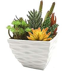 Idea Regalo - Aisamco Artificiale Prefabbricato Succulente Moderna Succulente Fioriera Disposizione 7 Pz Piante Succulente Finte Assortite in Vaso di Fiori Bianchi Centrotavola Succulente in Vaso