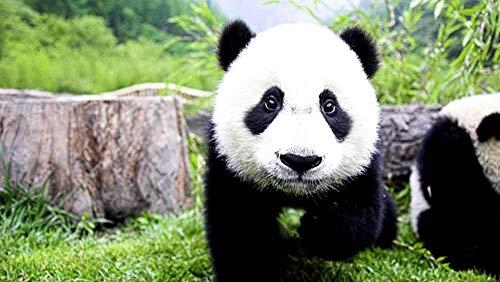 GHYU Puzzle de 1000 Piezas para Adolescentes y niños - el pequeño Panda te mira con curiosidad - Regalo para la Fiesta de cumpleaños de los Juegos de Madera