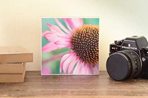 Fotografie Sonnenhut Echinacea Blüte Blumenwiese Foto auf Holz 13x13 cm handmade