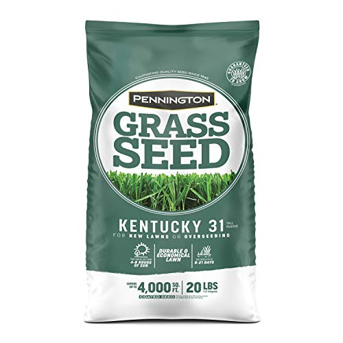 Pennington Kentucky 31 Tall Fescue Grass Seed, 20 Pounds