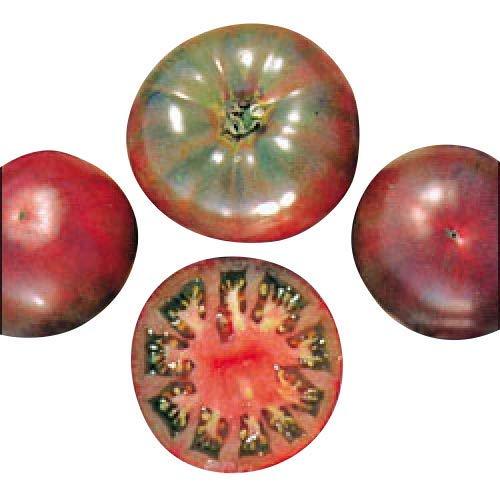 Tomate - Cherokee Purple 10 graines