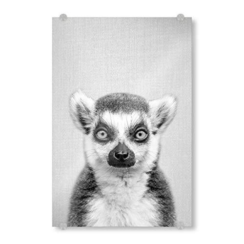 artboxONE Acrylglasbild 30x20 cm Tiere Lemur - Black & White Bild hinter Acrylglas - Bild Animal Animals Nature