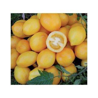 Premier Seeds Direct Zitronen Pflaumen Tomate enthaelt 75 Samen
