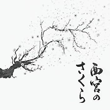 Hojas de sakura de nishinomiya