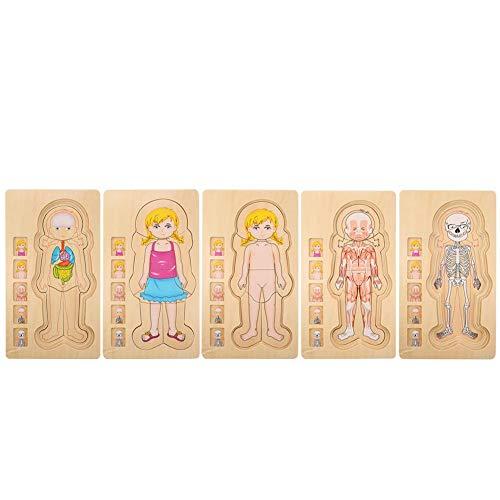 Zerodis Estructura del Cuerpo Humano Juguete de Rompecabezas, Ladrillo de Madera Educativo temprano No tóxico Ambientalmente amigable Juguete de ladrillo para bebés(Girl)