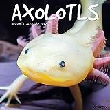 Axolotls 2022 Wall Calendar