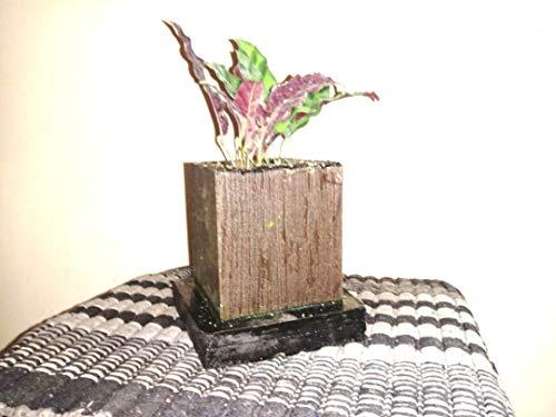 Anti Algen Set 25 Wasserpflanzen 15 Schwimmpflanzen, Aquarium