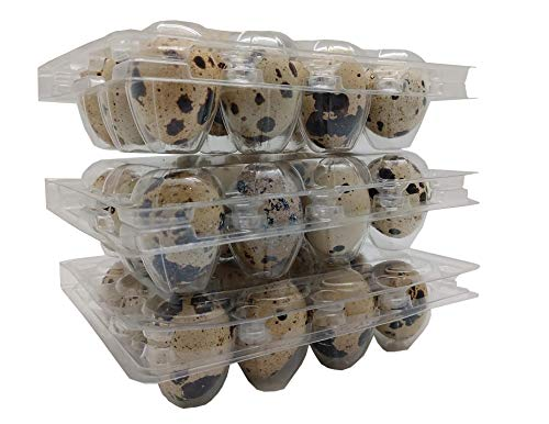 Quail Egg Plastic Cartons, Pack of 50 - Holds 12 Quail or Small Eggs - Food Grade Plastic (50 pack quail cartons) - Includes FREE Ebook with Recipes