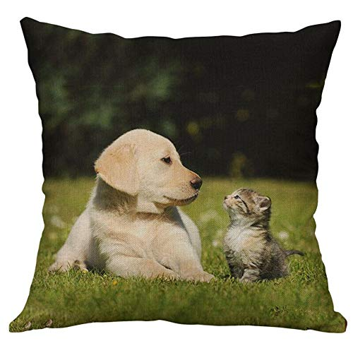 HFBBY Cuddly pet Cuddly Dog Pillow upholstered Pillow case (2, 24×24 inch)