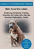 Amstaff: Ernährung, Erziehung, Pflege, Training und vieles mehr über den American Staffordshire Terrier!
